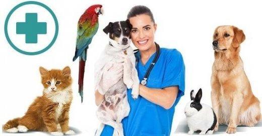 фотография Ветеринарной клиники Винни на метро Беляево