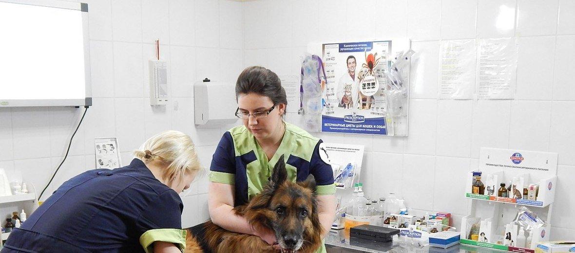 Фотогалерея - Ветеринарная клиника Веста на улице Котина
