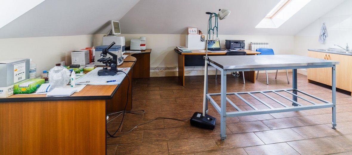 Фотогалерея - Центр эндоскопии, хирургии и травматологии Ветеринарная клиника доктора Седова