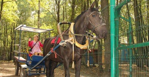 фотография Зоопарк в гостиничном в комплексе Регина Петровский