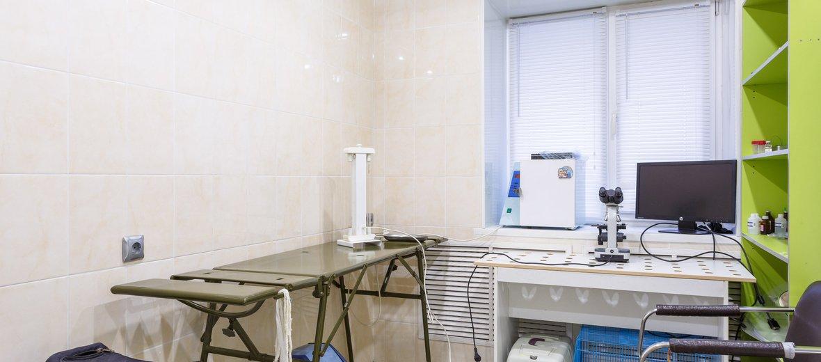 Фотогалерея - Ветеринарная клиника Биоритм