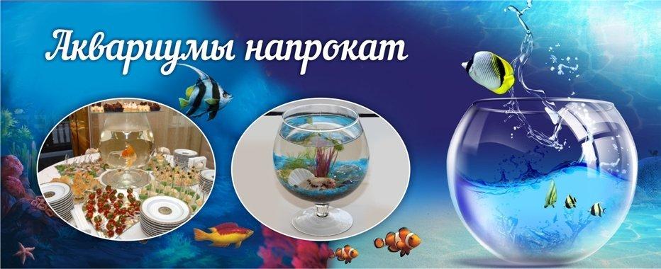 фотография Компания по обслуживанию морских и пресноводных аквариумов Аквамарин