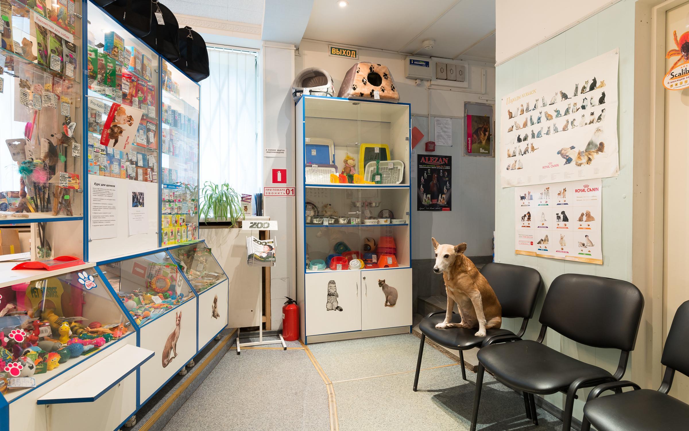 фотография Ветеринарной клиники Котёнок Гав на метро Ленинский проспект