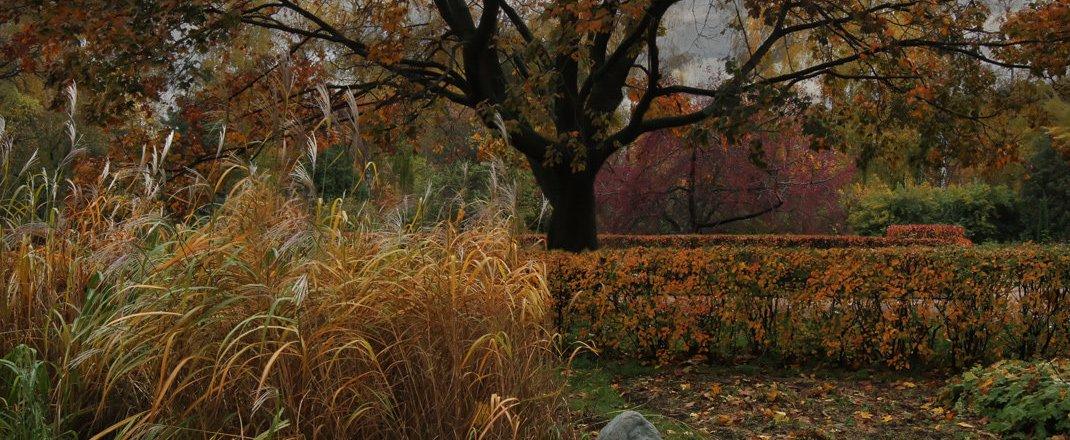фотография Парка Большой розарий в парке Сокольники