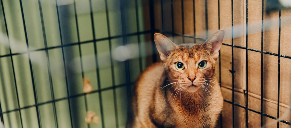 Фотогалерея - Ветеринарный центр ДокторВет