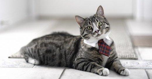 Цены на кастрацию котов казань