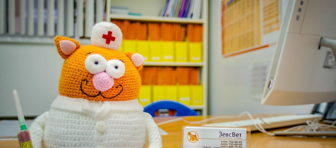Фотогалерея - Ветеринарная клиника ЗевсВет