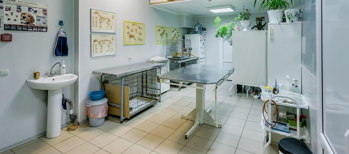 Фотогалерея - Ветеринарная клиника доктора Зарубина