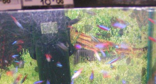 Магазины аквариум в ясенево
