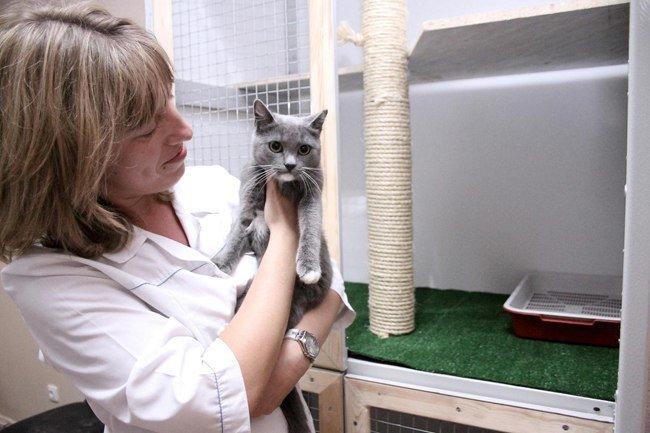 Фотогалерея - Ветеринарная клиника Надомвет