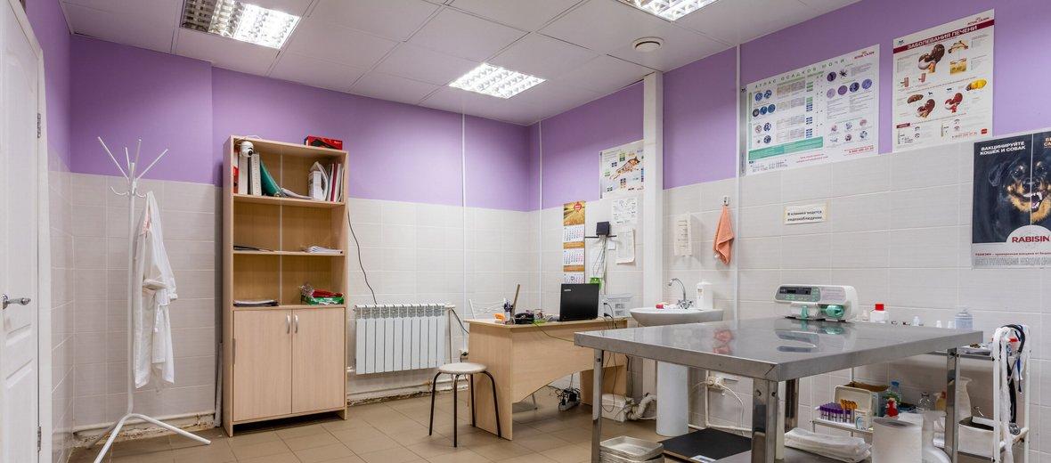 Фотогалерея - Ветеринарная клиника Лесной городок