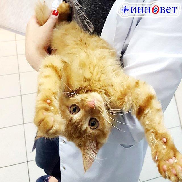 фотография Ветеринарной клиники Инновет в Выхино-Жулебино